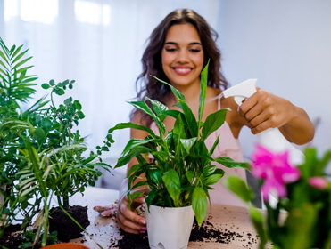 Using Plants In Your Apartment
